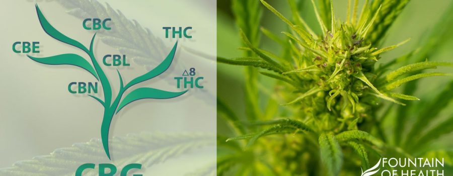 What is CBG? The Mother of all Cannabinoids
